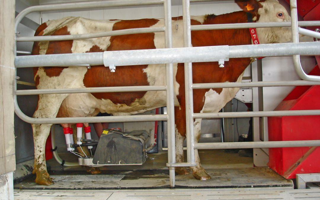 GestaTEST ou réduire l'intervalle vêlage-vêlage en détectant rapidement les vaches vides