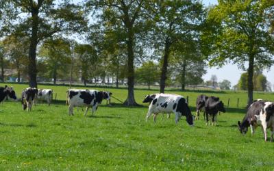 Gaz à effet de serre, empreinte carbone et efficacité économique : des axes de performances pour votre exploitation agricole