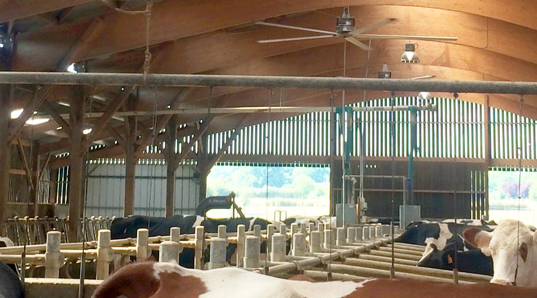 Une bonne ventilation de votre bâtiment améliore le confort des vaches