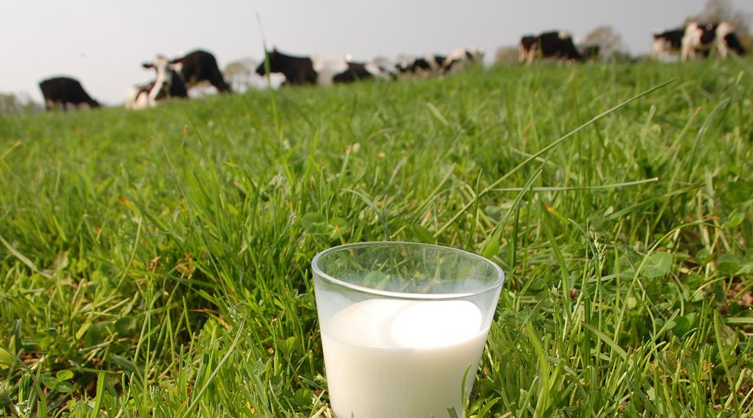 Chiffres et indicateurs du prix du lait : des indicateurs encourageants