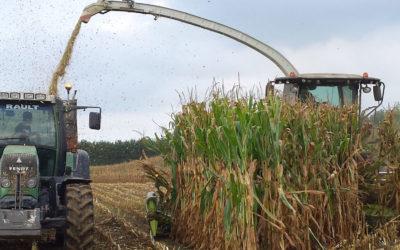 Diagnostiquer les maïs pour décider des chantiers d'ensilage