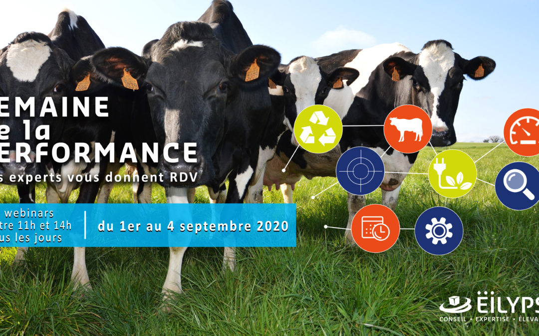 Semaine de la performance du 1er au 4 septembre 2020